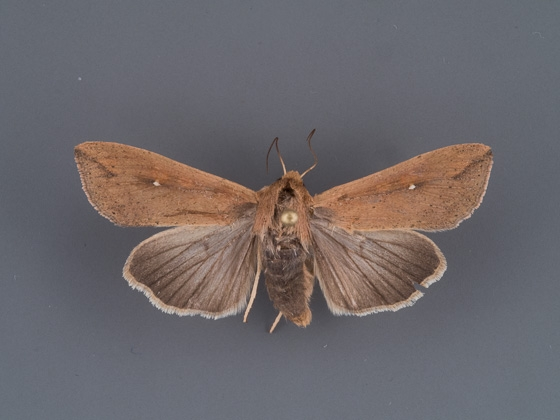 condica-videns-female