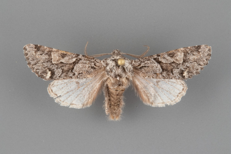 10504 Egira variabilis male