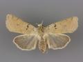 10881 Richia chortalis female