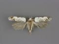 1918 Ritseria fuscotaeiaella male