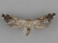 2344 Glyphipterix montisella