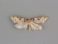 3585 Anopina eleonora