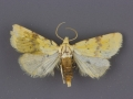 9729 Azenia implora-male